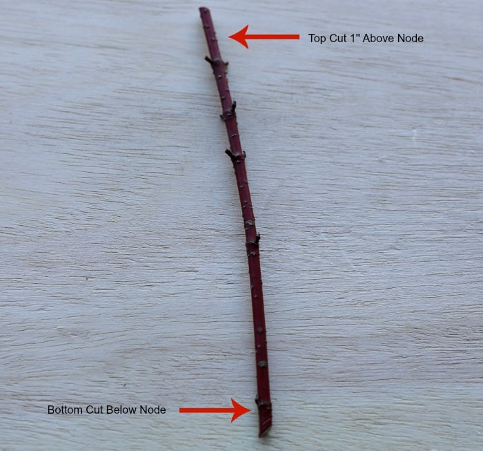 red stick with 5 nodes laying on a piece of plywood.