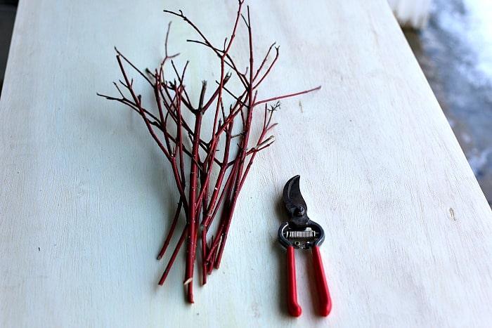 freshly cut wood cuttings from a red twig dogwood shrub