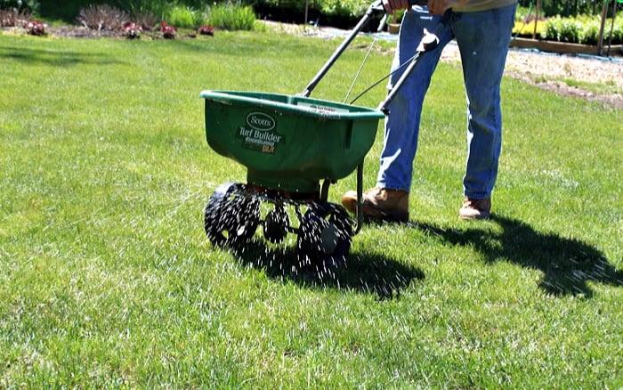 How To Fertilize Your Lawn Plant For Success