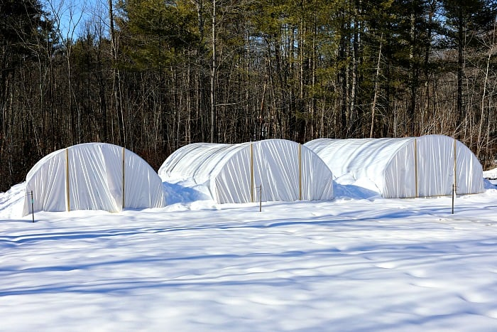 3 hoop houses covered in white plastic surrounded by snow.