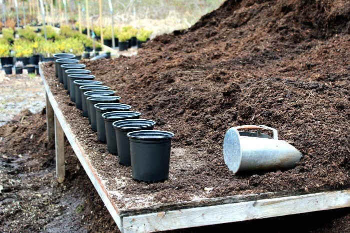 black plastic pots lined up on a wooden table with brown potting mix next to them