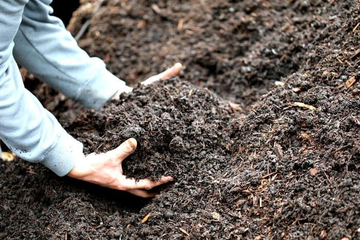 man picking up dark potting mix with bare hands