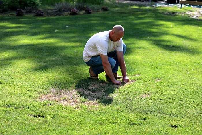 man pulling on lawn to test for white grubs