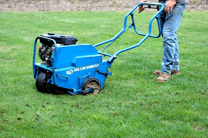 man walking behind blue core aerator making plugs in green lawn