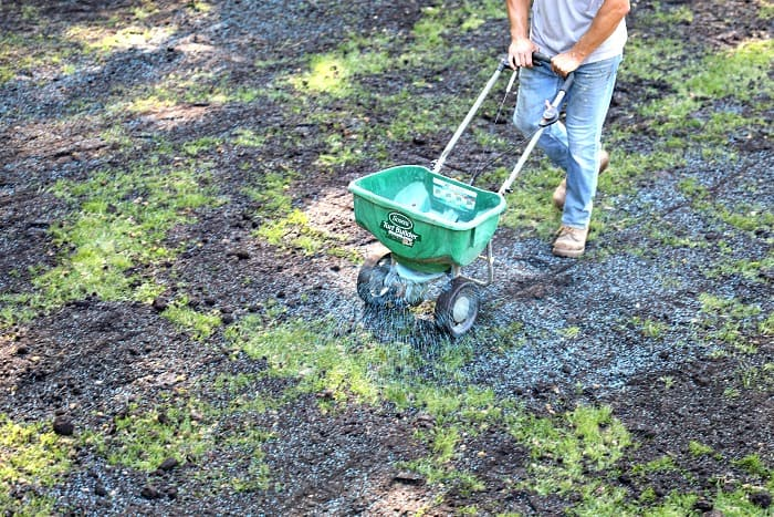 man pushing green broadcast spreader distributing blue grass seed on lawn