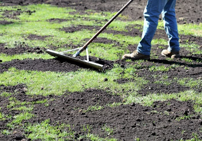 Man top dressing lawn with compost using metal landscape rake