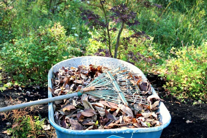 wheelbarrow full of leaves with green rake on top.