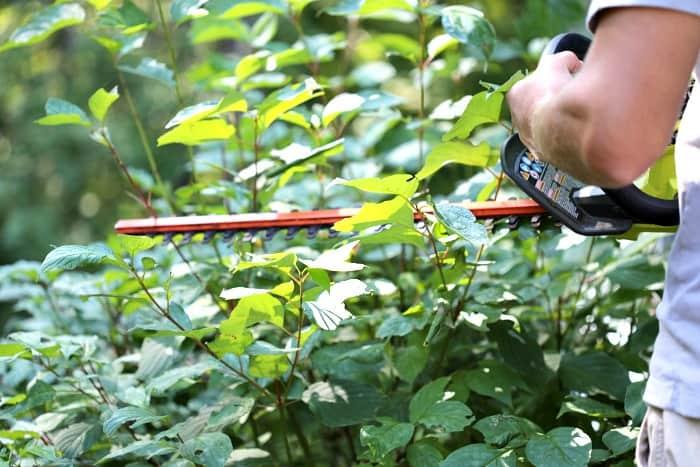 man using hedge trimmer to prune shrubs