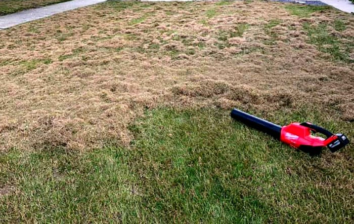 brown thatch on top of green lawn with blower laying on the grass