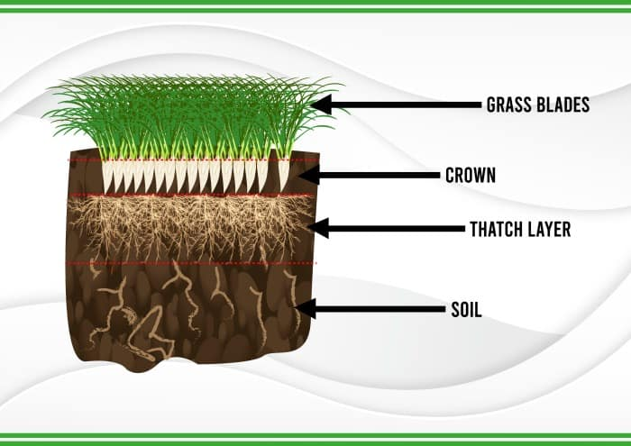 pictogram showing thatch layer in lawns soil