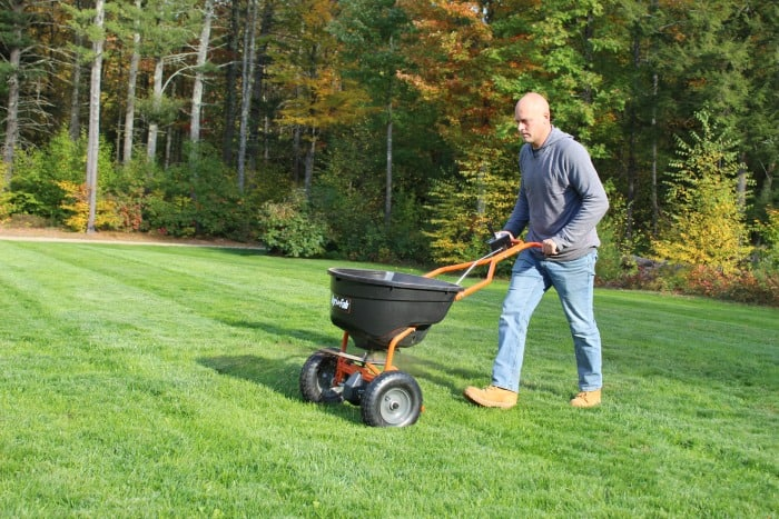 man spreading winterizer fertilizer over green lawn