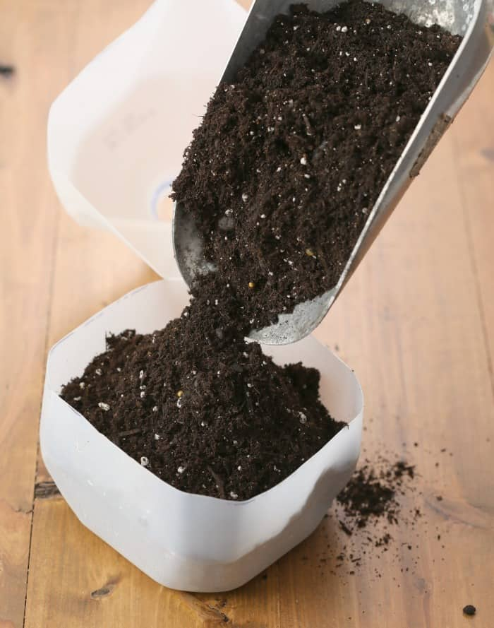pouring potting mix into milk jug for winter sowing