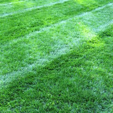 green lawn with fresh mowing stripes