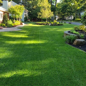 a green lawn in the middle of summer with landscape shrubs in beds