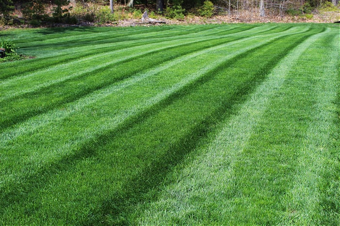 green grass with mowing stripes growing in clay soil